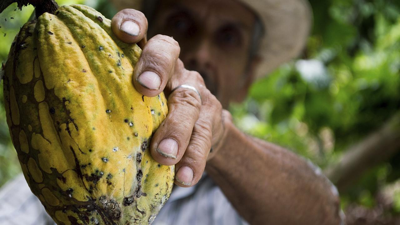 IICA y Costa Rica buscan aumentar productividad y sostenibilidad del cacao