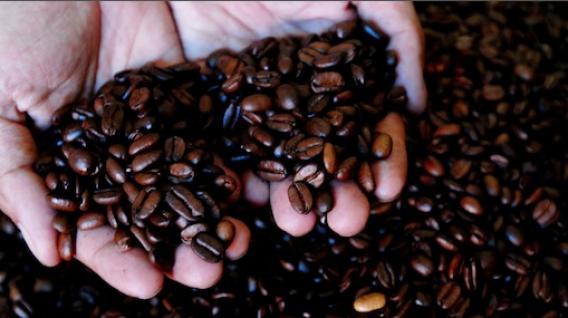 Exportaciones de café en Honduras se disparan un 25% en marzo