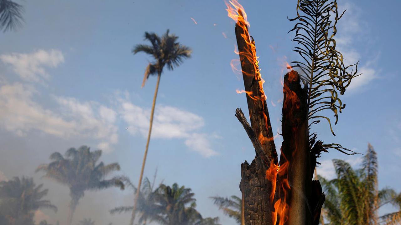 La deforestación de la Amazonía sufre una epidemia ambiental silenciosa