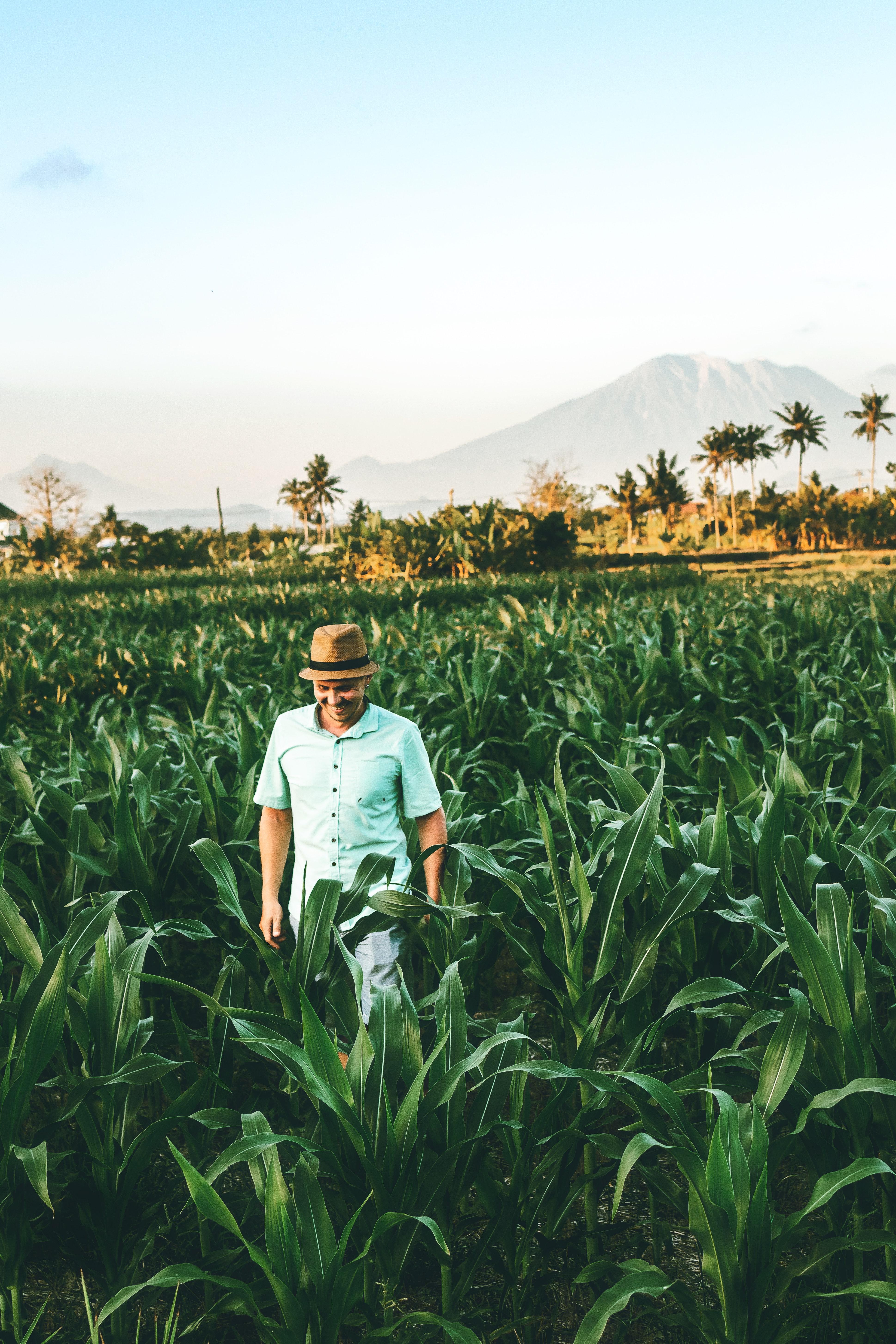 Panamá y la FAO acuerdan cooperación para los próximos cinco años
