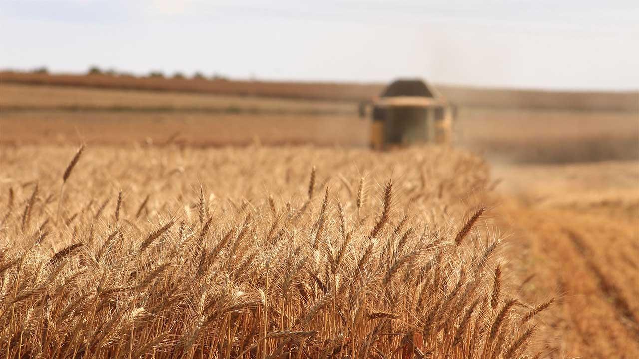 Rusia duplicará con creces los suministros de granos a Venezuela: Ifax