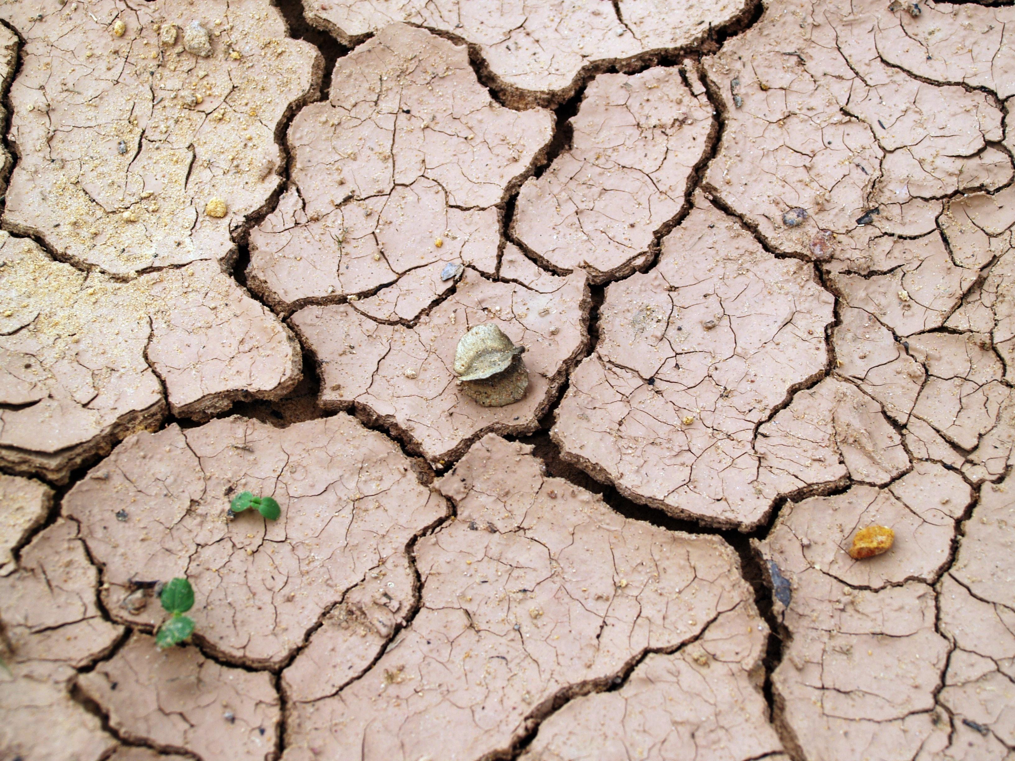 México destinará fondos de adaptación al cambio climático a Centroamérica