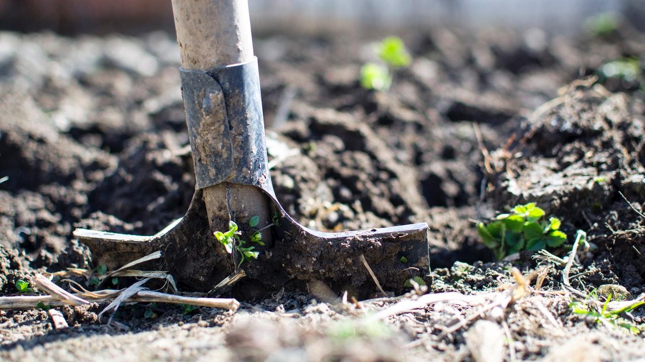 Daños a la agricultura retrasará recuperación de Centroamérica