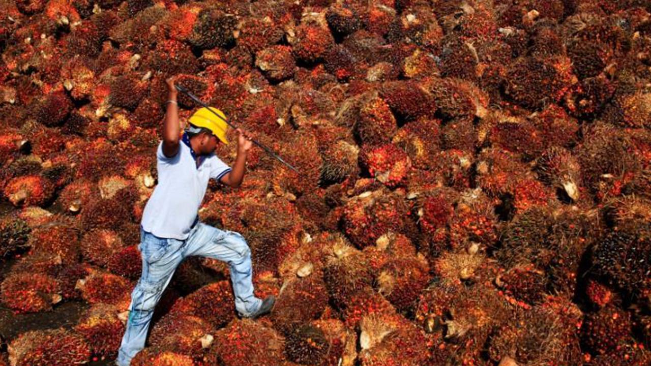 El aceite de palma sostenible, una realidad creciente