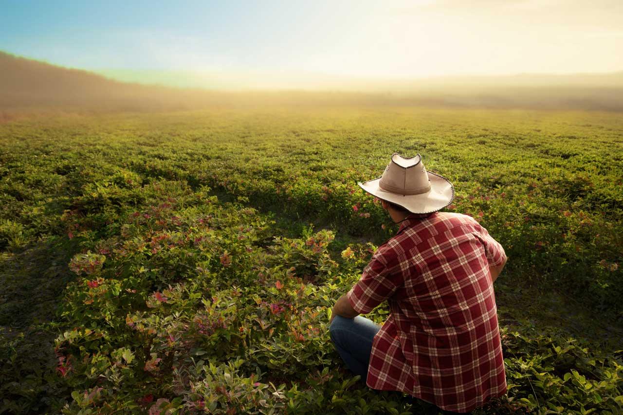 América debe mantenerse como la reserva agroalimentaria mundial, dice el IICA