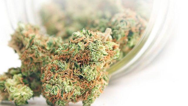 Esta empresa paga 3,000 dólares al mes por probar productos de mariguana