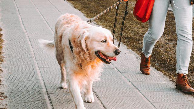 Pese al COVID-19, la ciudad china de Yulin realiza festival de carne de perro