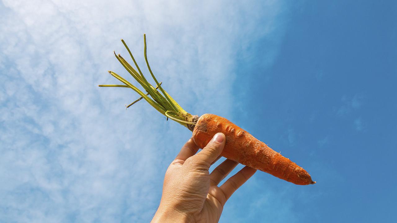 En Argentina, las zanahorias descartadas adquieren nueva vida en la industria