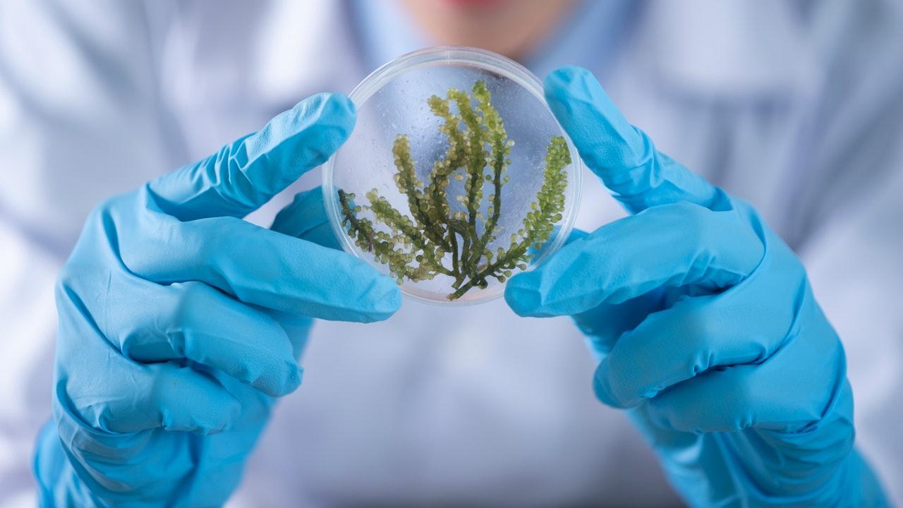 """El papel de las mujeres en la ciencia es """"esencial"""", pero falta visibilidad"""