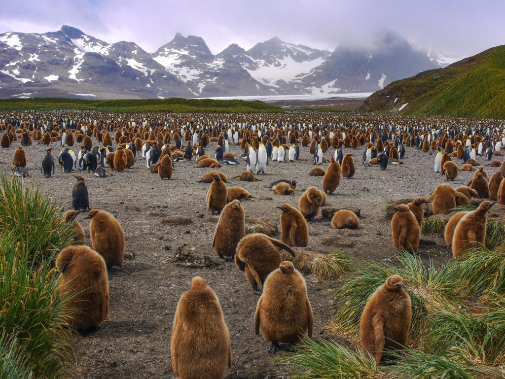La Inteligencia Artificial salvará a los pingüinos de la Antártica
