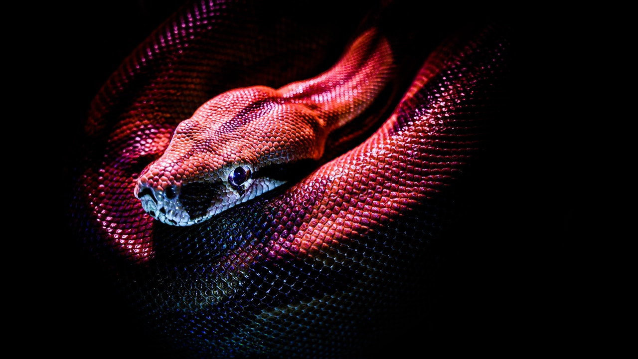 Coronavirus tuvo su origen en serpientes y murciélagos: estudio