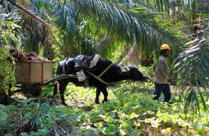 Palmeros guatemaltecos vigilarán con tecnología satelital que no haya deforestación en sus cultivos