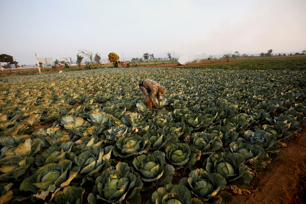 IICA y UNITAR impulsan capacidades agrícolas en América Latina y el Caribe