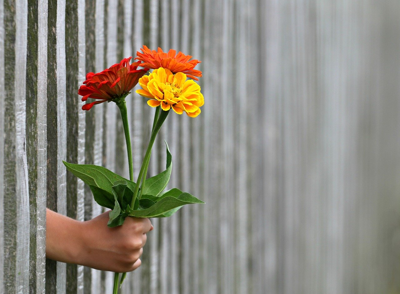 Coronavirus: Floricultores guatemaltecos reparten en las calles el producto que no pudieron exportar