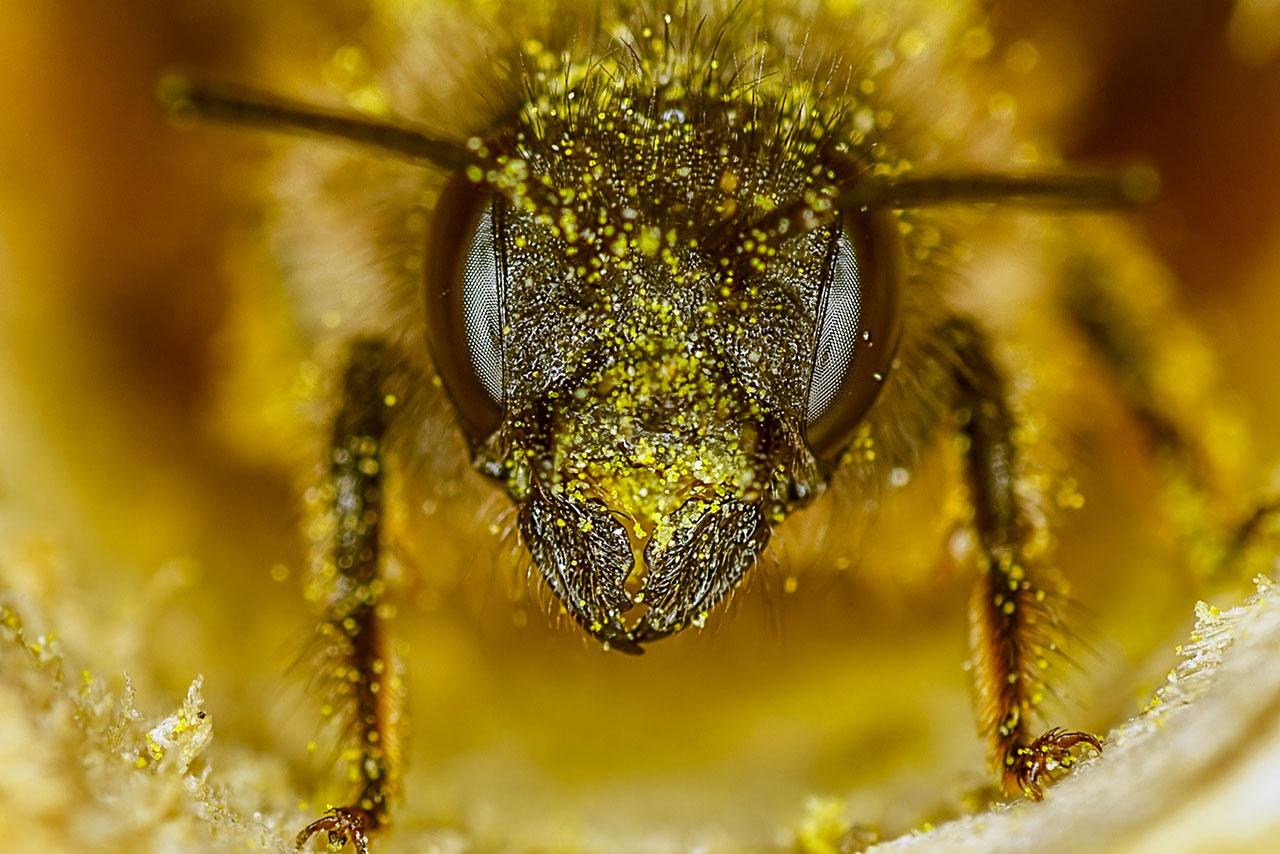 UE confirma prohibición de plaguicidas de Bayer por daño a las abejas