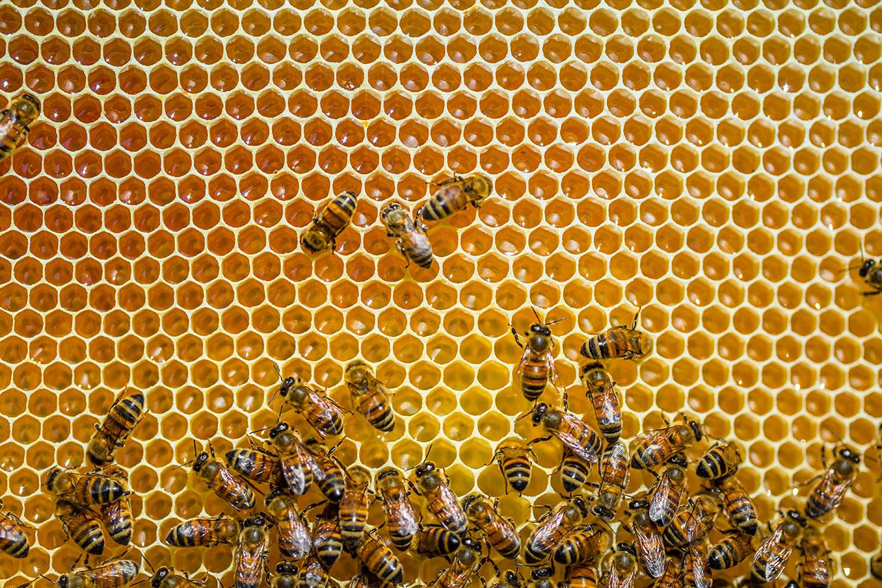 IICA y UE impulsan  la apicultura en las zonas cafetaleras de El Salvador