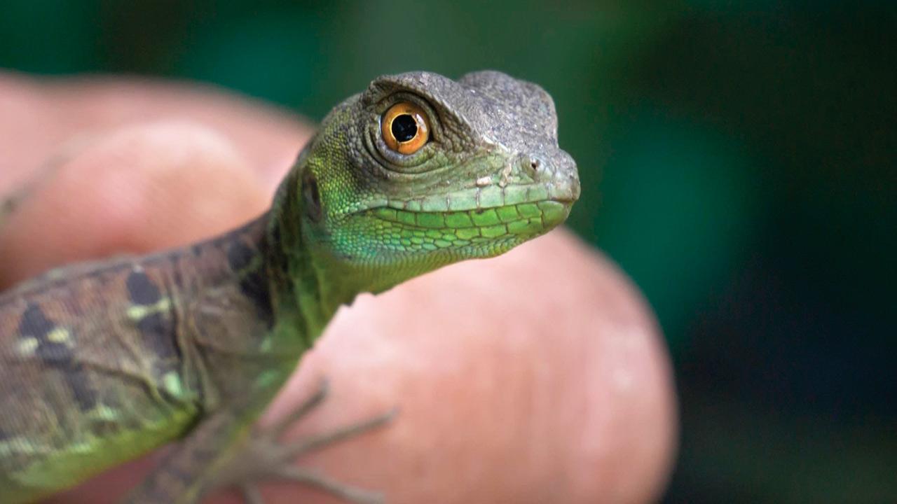 WWF advierte sobre alarmante reducción de biodiversidad de Latam