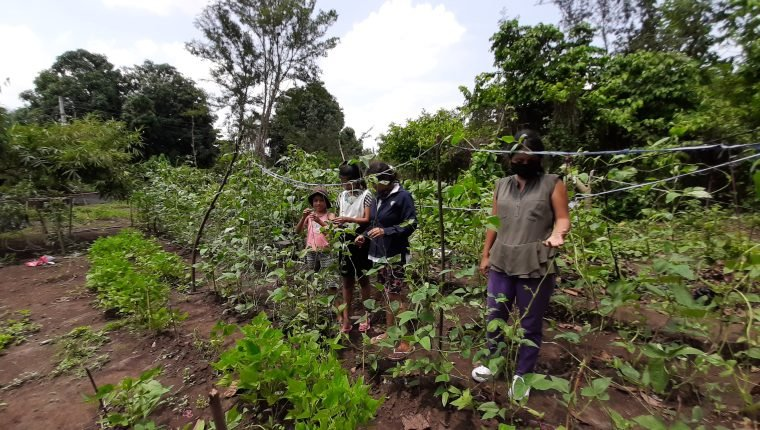 Coronavirus: el huerto que se convierte en un alivio para familias necesitadas de Ocosito