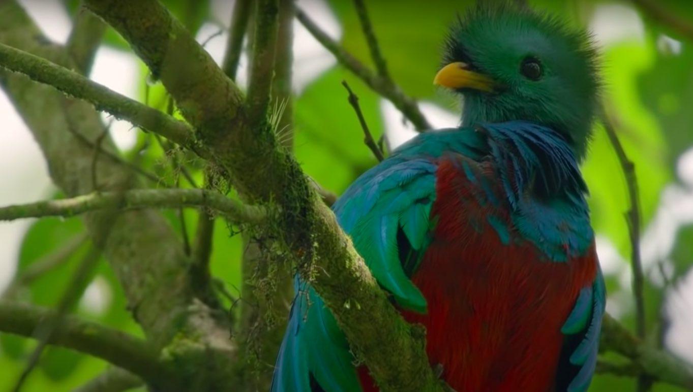Animal Planet mostrará el lado salvaje de Centroamérica