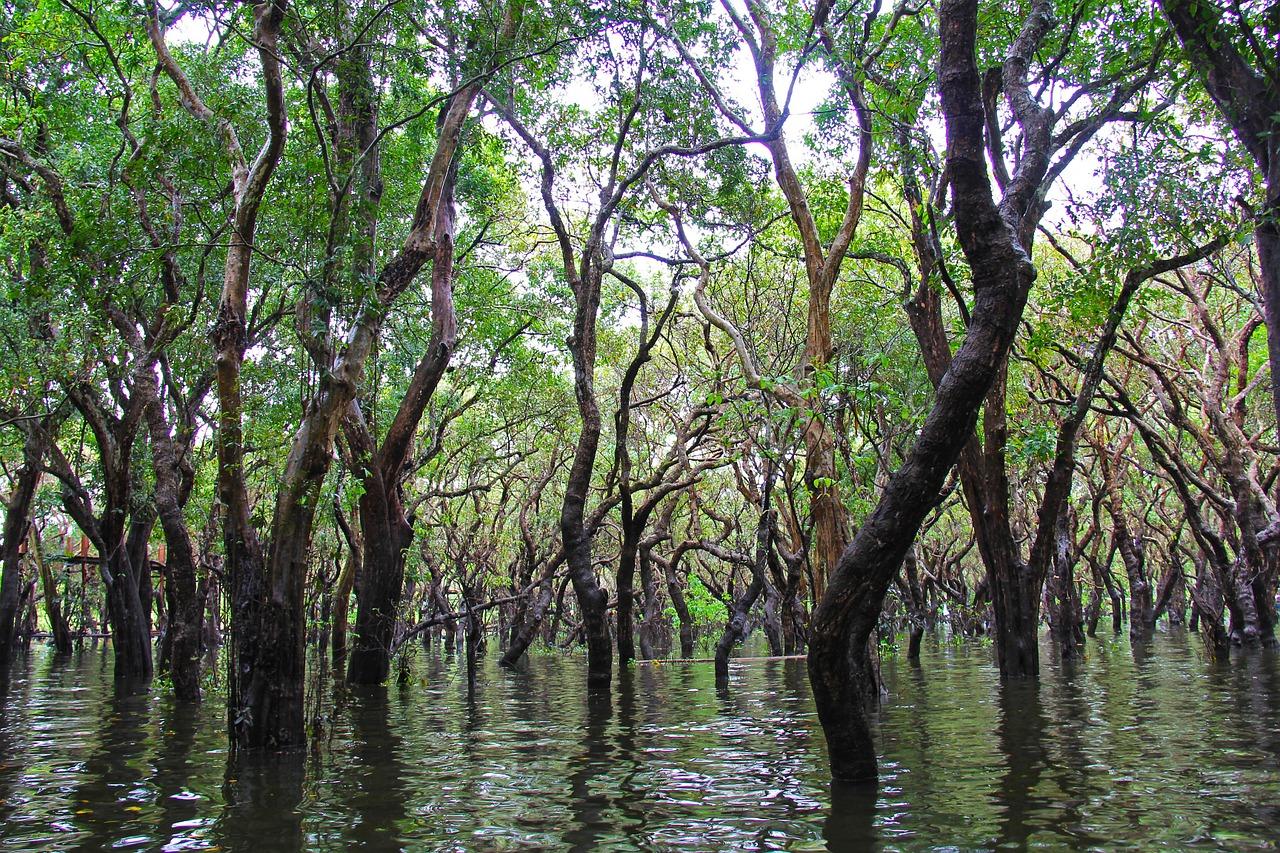 Alemania contribuye a la conservación y restauración de manglares en el Arrecife Mesoamericano