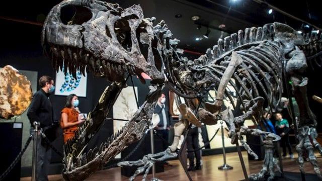 Venden esqueleto de dinosaurio por 3.5 millones de dólares