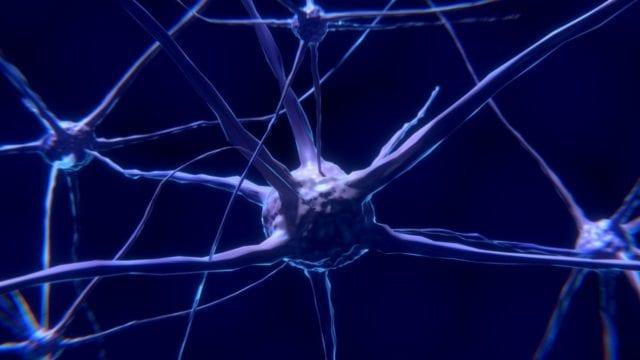 Té de ayahuasca usado por chamanes fomenta la formación de nuevas neuronas: estudio