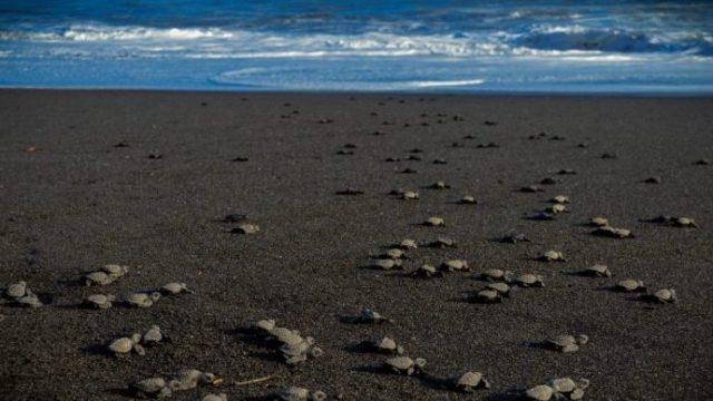 Monterrico playa Guatemala