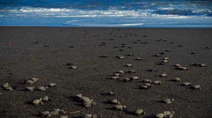 Conoce la sorprendente playa de Guatemala con arena negra