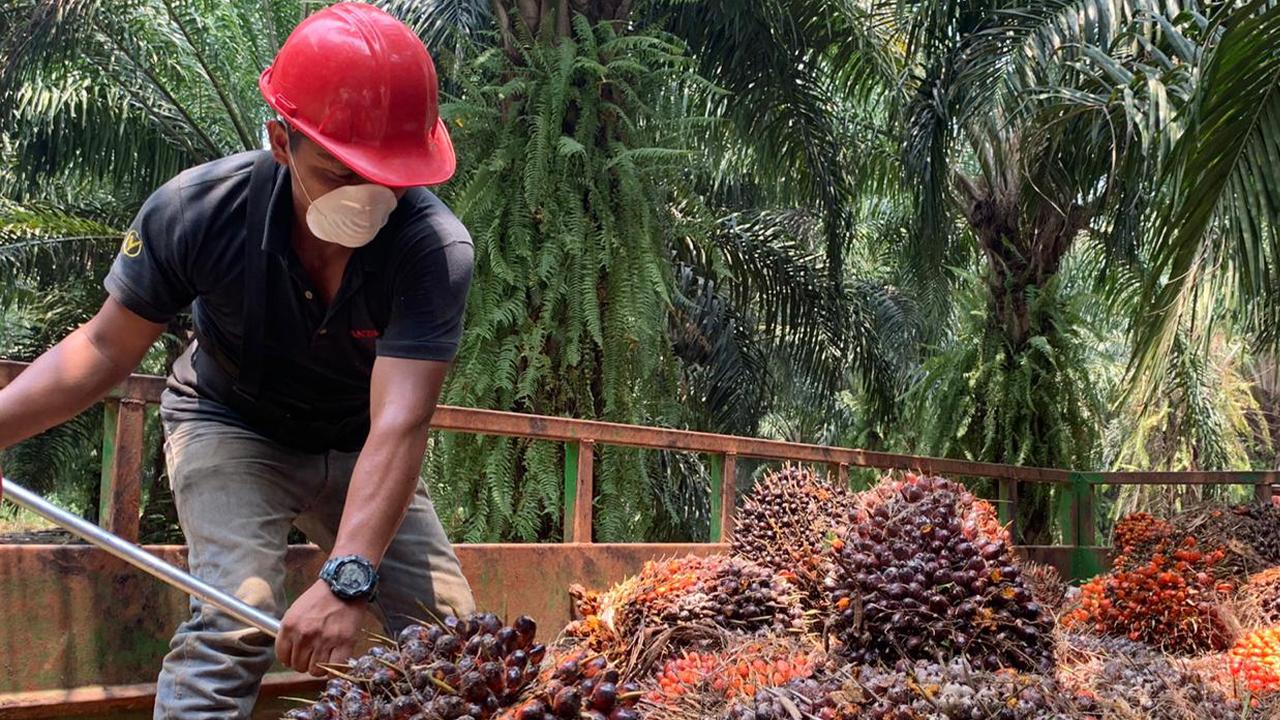 Aceite de palma: La industria que no paró a pesar del COVID-19
