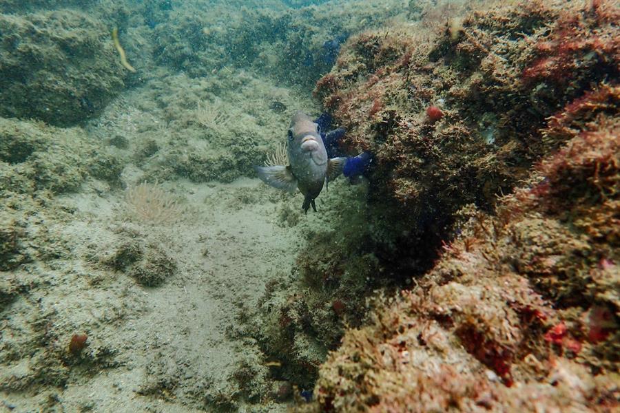 Ambientalistas urgen política marina que proteja los recursos en Costa Rica