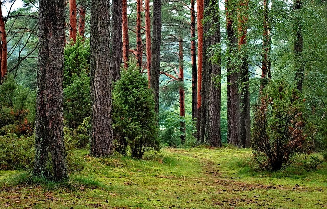 """Costa Rica pide convertir los bosques en """"medios para el bienestar"""""""