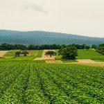 Uso de tecnología sostenible en la agricultura