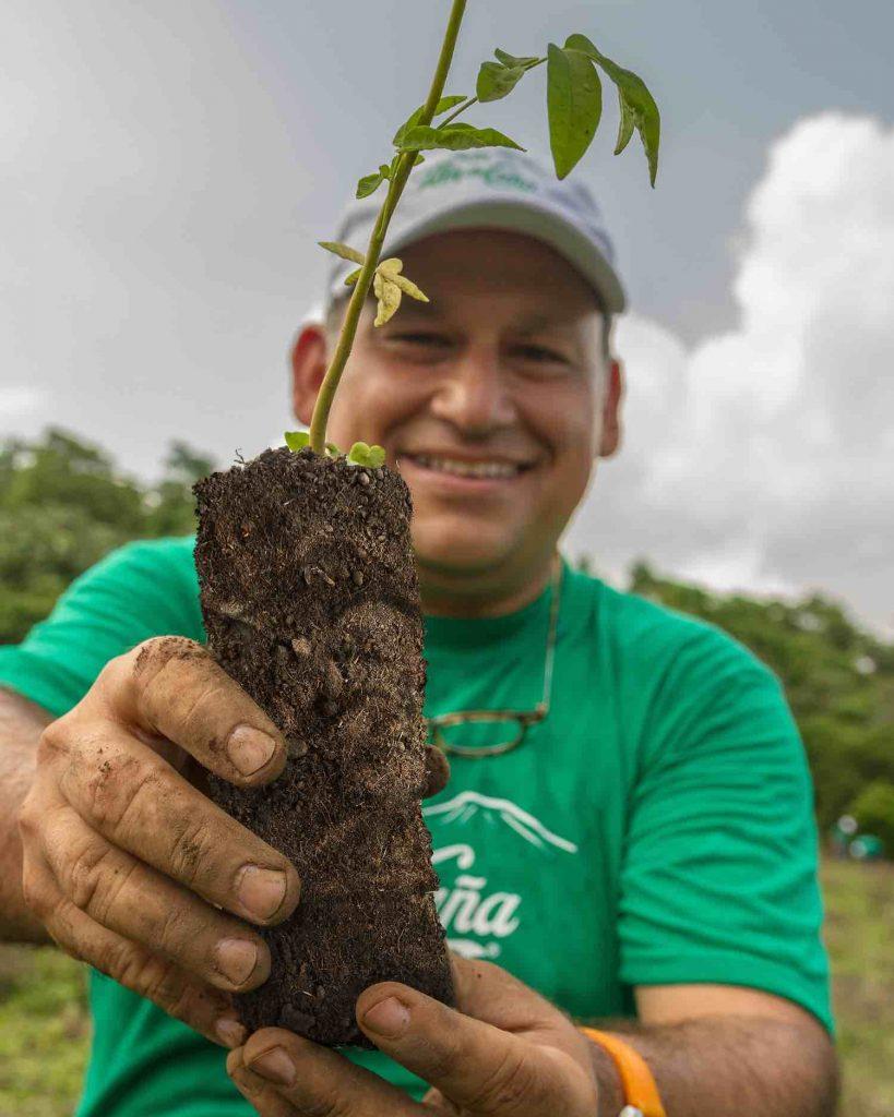 Flor de caña reforestación