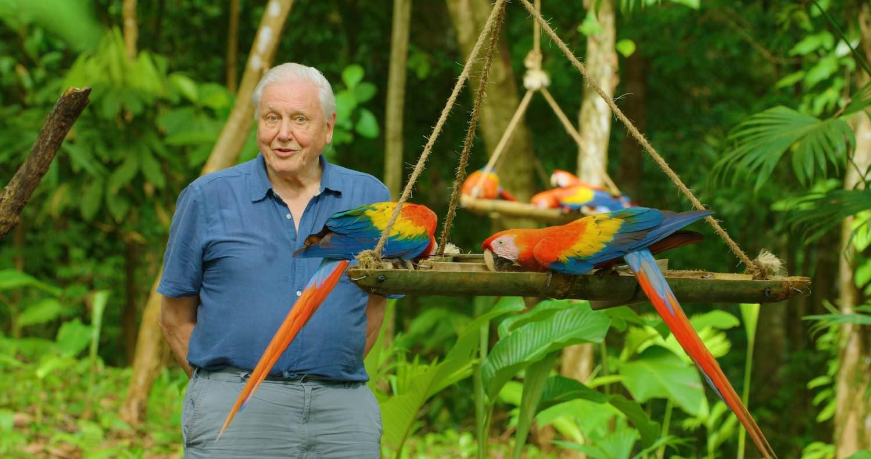 Fauna de Costa Rica será la protagonista de una producción de Netflix