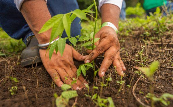 Ron nicaragüense Flor de Caña afianza su compromiso por el medio ambiente