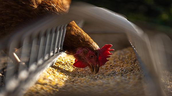 China reporta posible caso de gripe aviar H10N3 en humanos