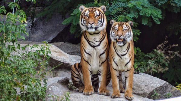 OMS pide a países suspender venta de animales salvajes en mercados