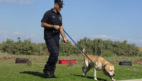 El olfato canino es muy fiable para detectar COVID-19: estudio francés
