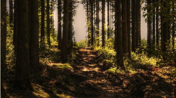 Costa Rica apuesta por la Inteligencia Artificial de Estonia en el sector forestal