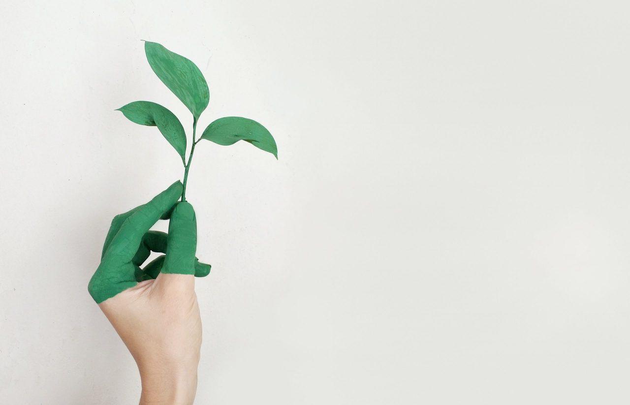 Bonos Verdes, una gran oportunidad de inversión en Costa Rica