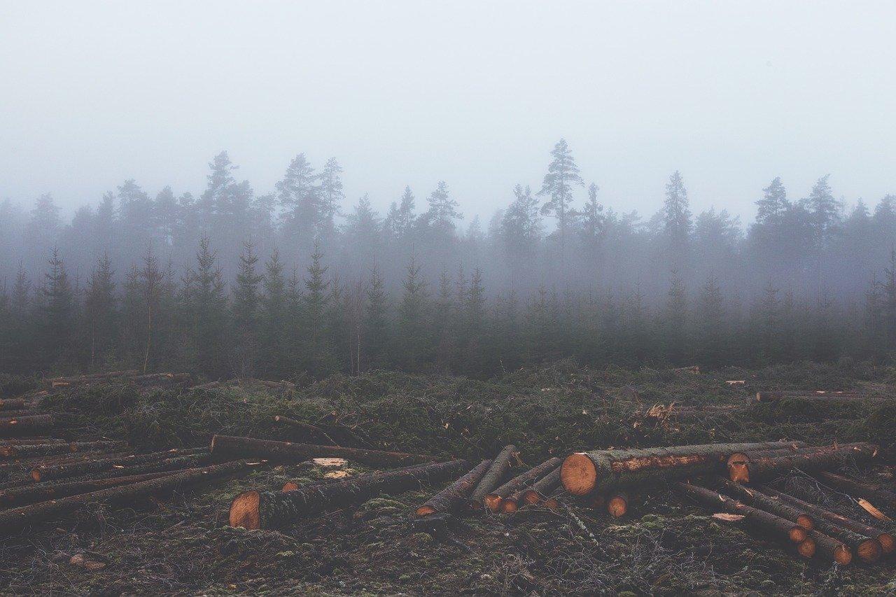 La deforestación en la Amazonía brasileña rompe récord en abril