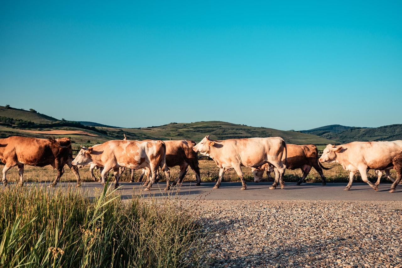 Instan a Latinoamérica a impulsar ganadería sustentable y competitiva