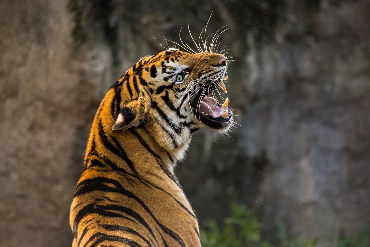 El consumo de animales salvajes desciende casi un 30% a causa de la pandemia