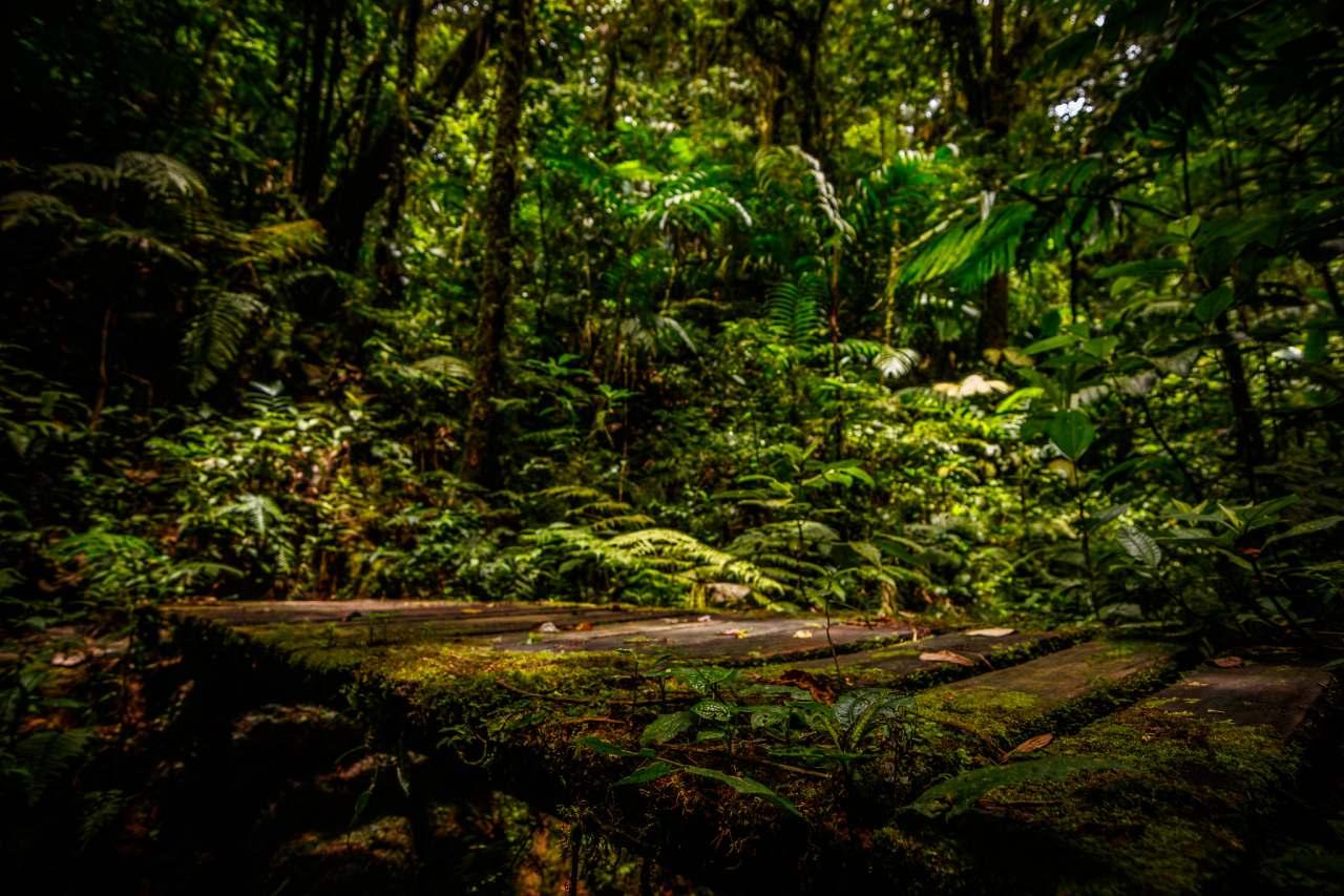 Argentina obtiene 82 millones de dólares para proteger los bosques nativos
