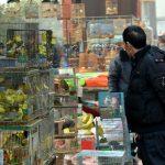 Venta de animales en Wuhan