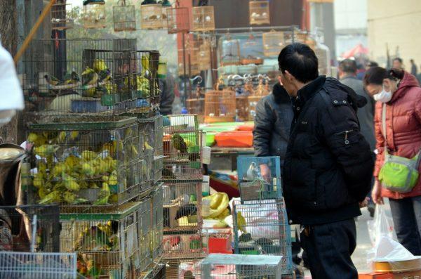 Casi 50,000 animales vivos estaban a la venta en Wuhan antes de que comenzara brote COVID: estudio