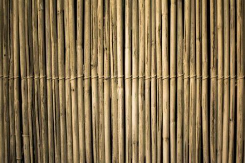 Bambú en Guatemala: Qué producirá la nueva planta industrial cuyo costo será de Q8millones