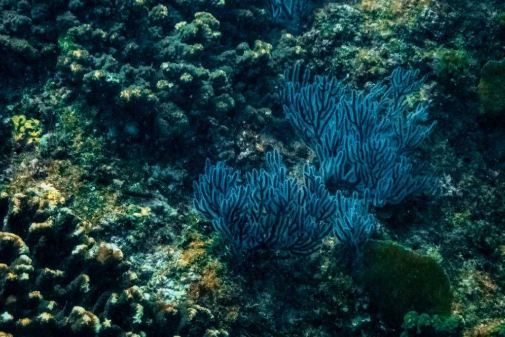 Ocean Culture Life