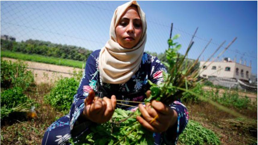Mujeres en Gaza crean cosméticos a partir de hierbas locales