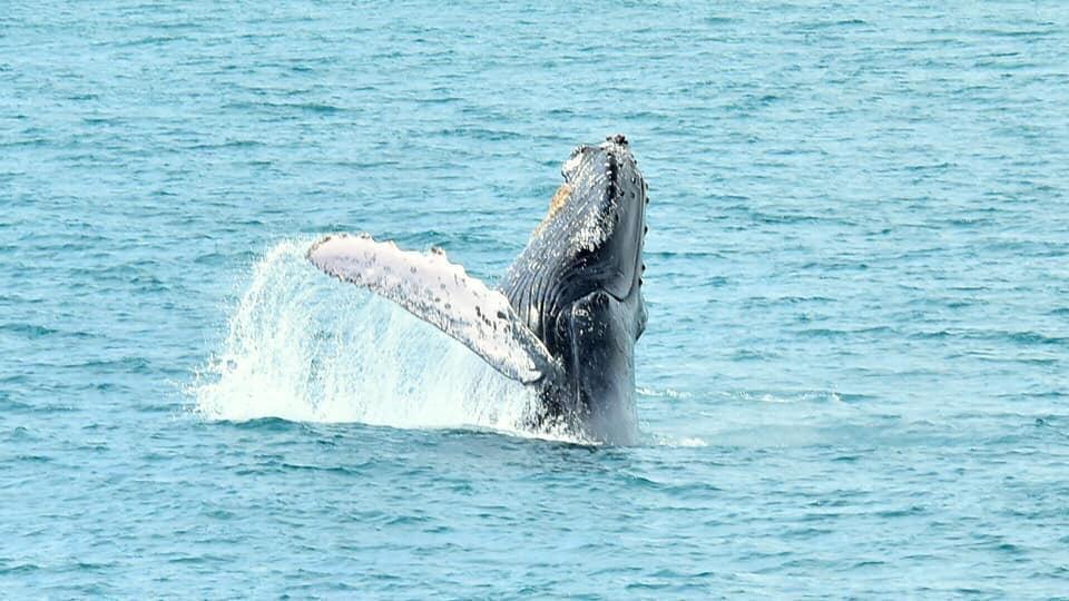 Costa Rica se encuentra lista para el avistamiento de ballenas
